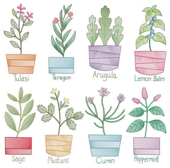 Vintage Sketch Herbs 4