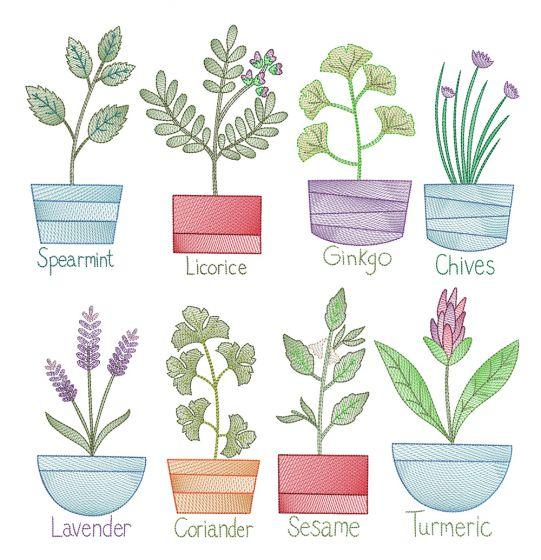 Vintage Sketch Herbs 3